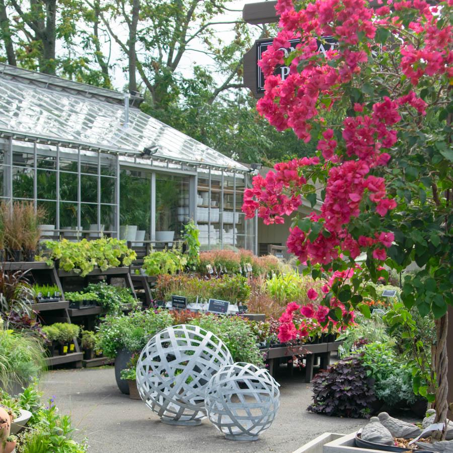 garden center in greenwich